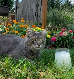 Tips for Keeping Your Cat Cool During the Summer